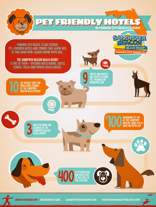 Infographic Pet Friendly Hotels In Panama City Beach Fl
