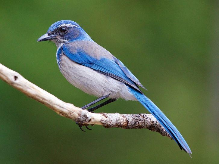 Science News North American Wildlife Cute Baby Animals Blue Bird