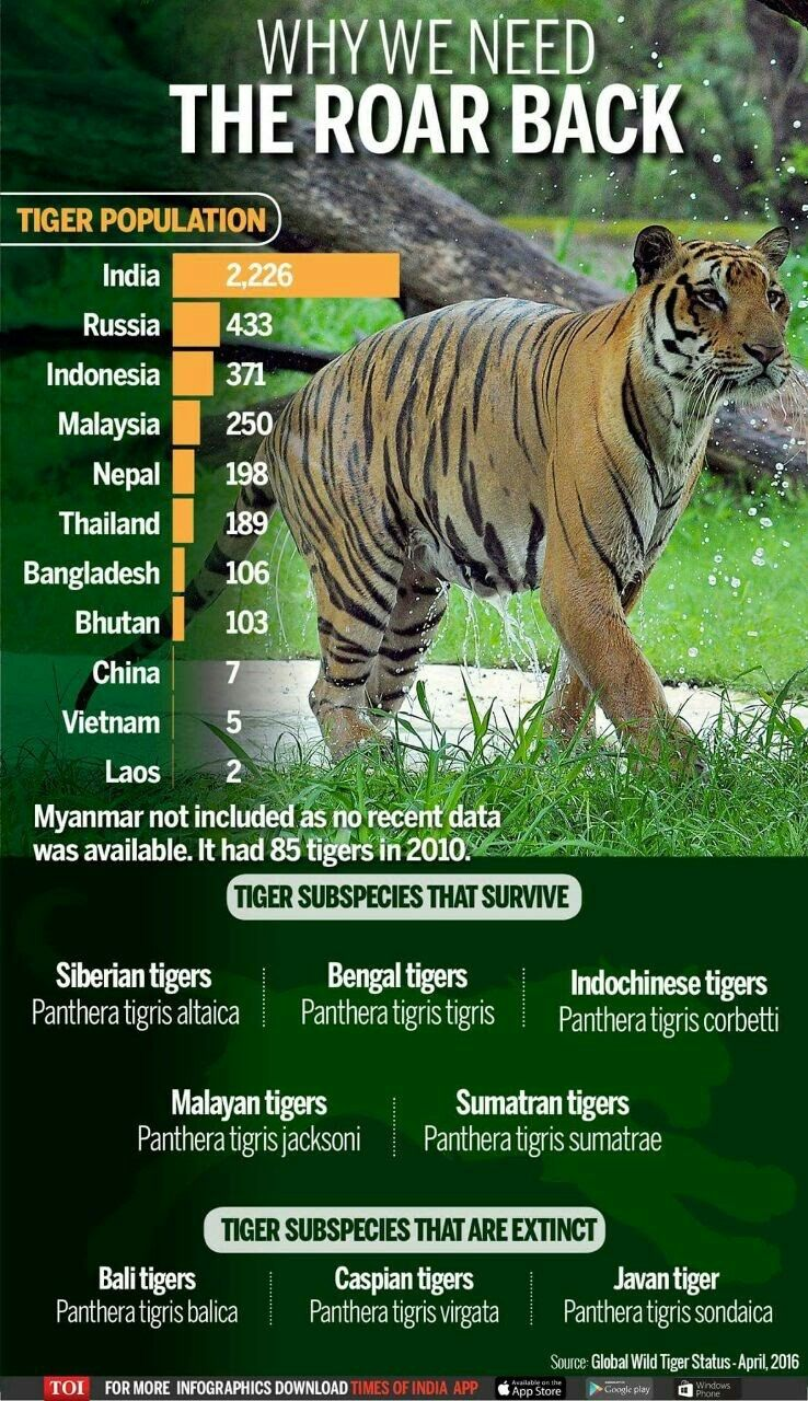 Pin by Navaz on Save The Tigers. Tiger facts, Tiger