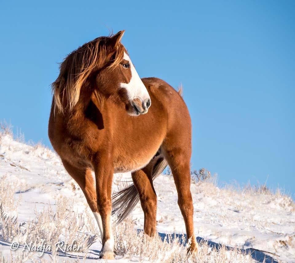 Pin By Alcenir Jose On Horses Horses Wild Horses Sand Wash Basin