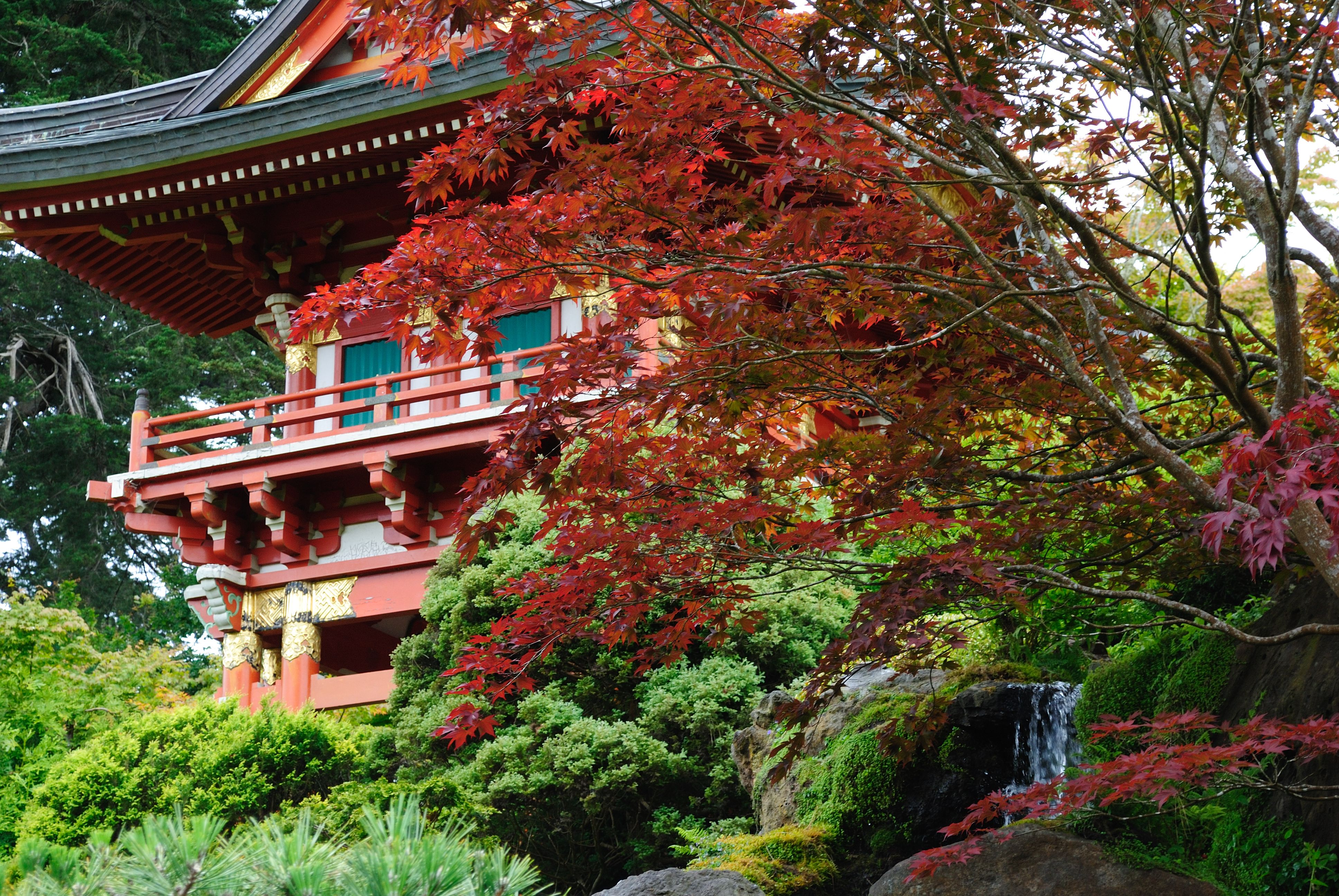 Japanese Tea Garden, San Francisco | Been There Done That ...