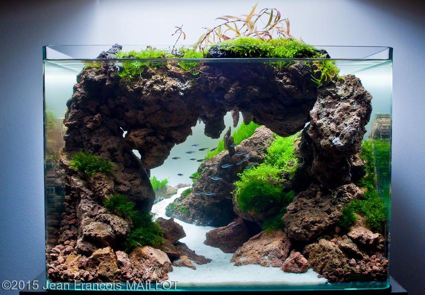2015 Aga Aquascaping Contest Oświetlenie Do Akwarium Kupicie