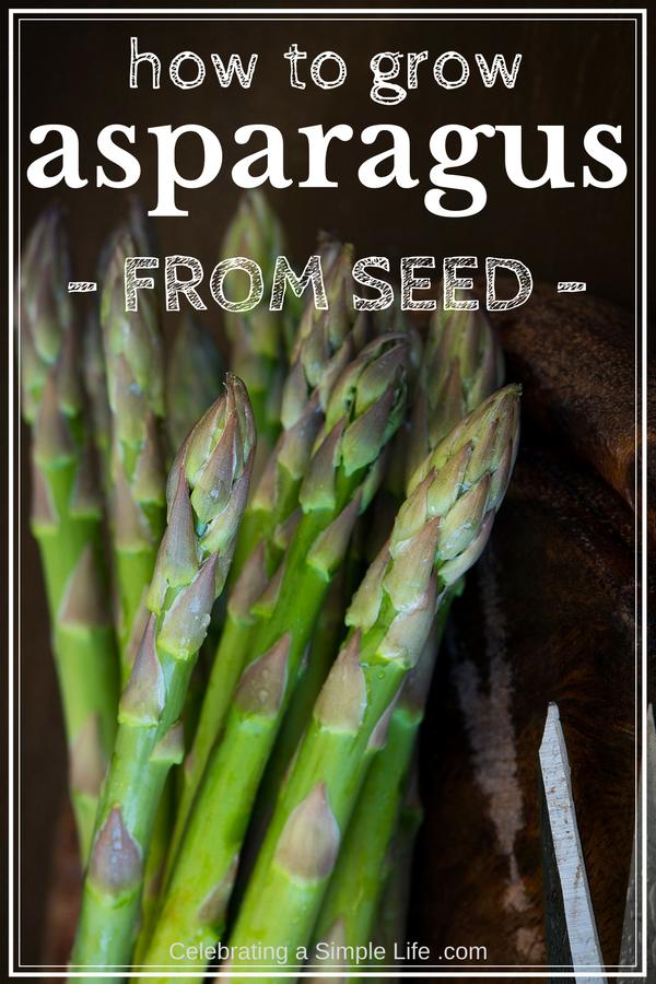 How To Grow Asparagus From Seed Asparagus Asparagus 400 x 300