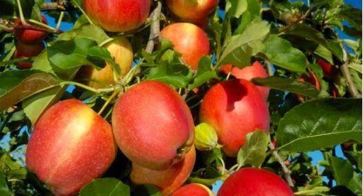 Fruit Tree Growing Guide Avec Images Jardinage Potager Jardins