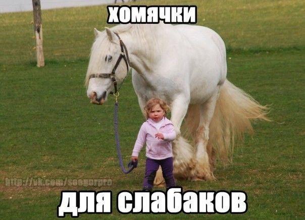 Ночи дорогая, смешные картинки с надписями лошади