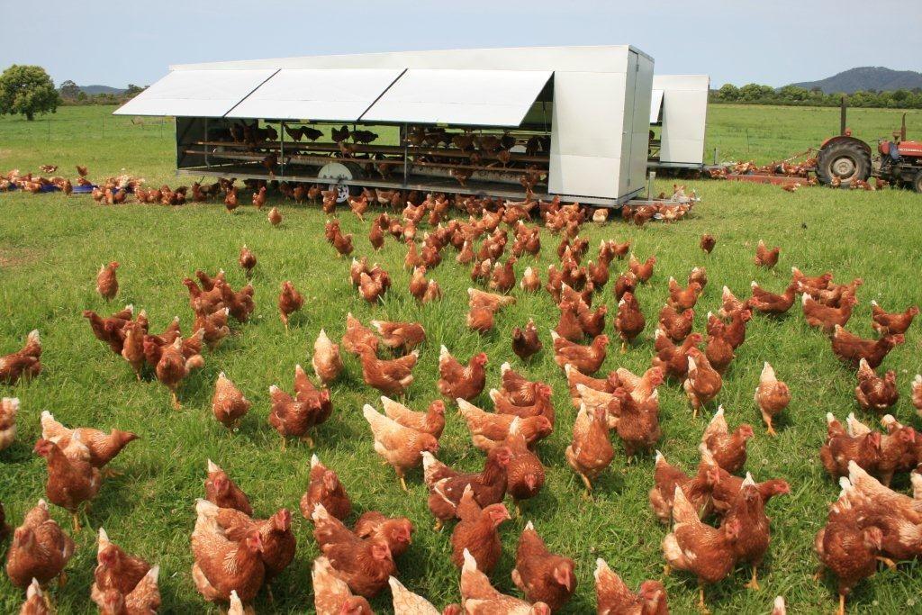 Chicken Caravan Free Range Chickens Free Range Chicken Eggs Poultry Feed
