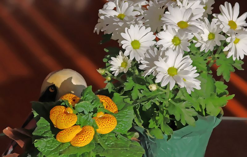 Still Life with pelican, daisies, and calceolaria