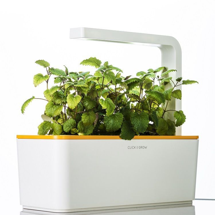Technology To Grow Plants Year-round For Indoor Gardening