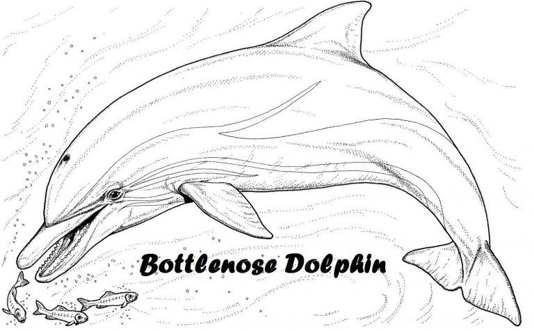 Dolphin Clip Art Art 8211coloring Pages Amp Designs Pertaining To Download Printable Dolphins