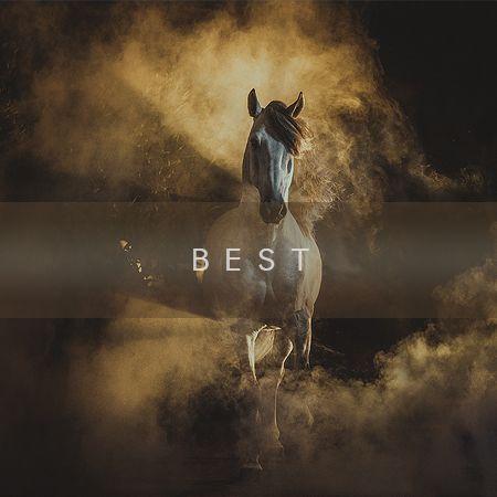 Photographs of horses by professional equine photographer Ekaterina Druz