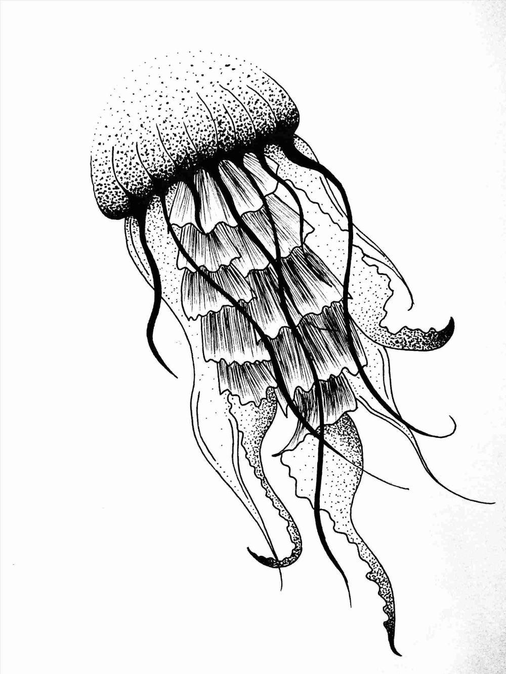 Jellyfish Drawing Easy Gdpicture Us Jellyfish Sketch Jellyfish Drawing Easy Gdpicture Us Jellyfish Sketch Jellyfish Drawing Jellyfish Art Stippling Art