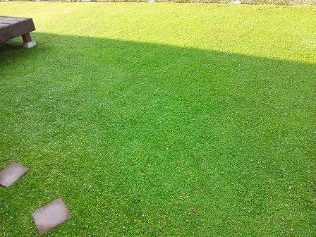3分でわかるクラピアのメリットとデメリット 緑の温もりを感じる庭づくり 北限のクラピア 楽天ブログ 庭 づくり 庭 裏庭の造園