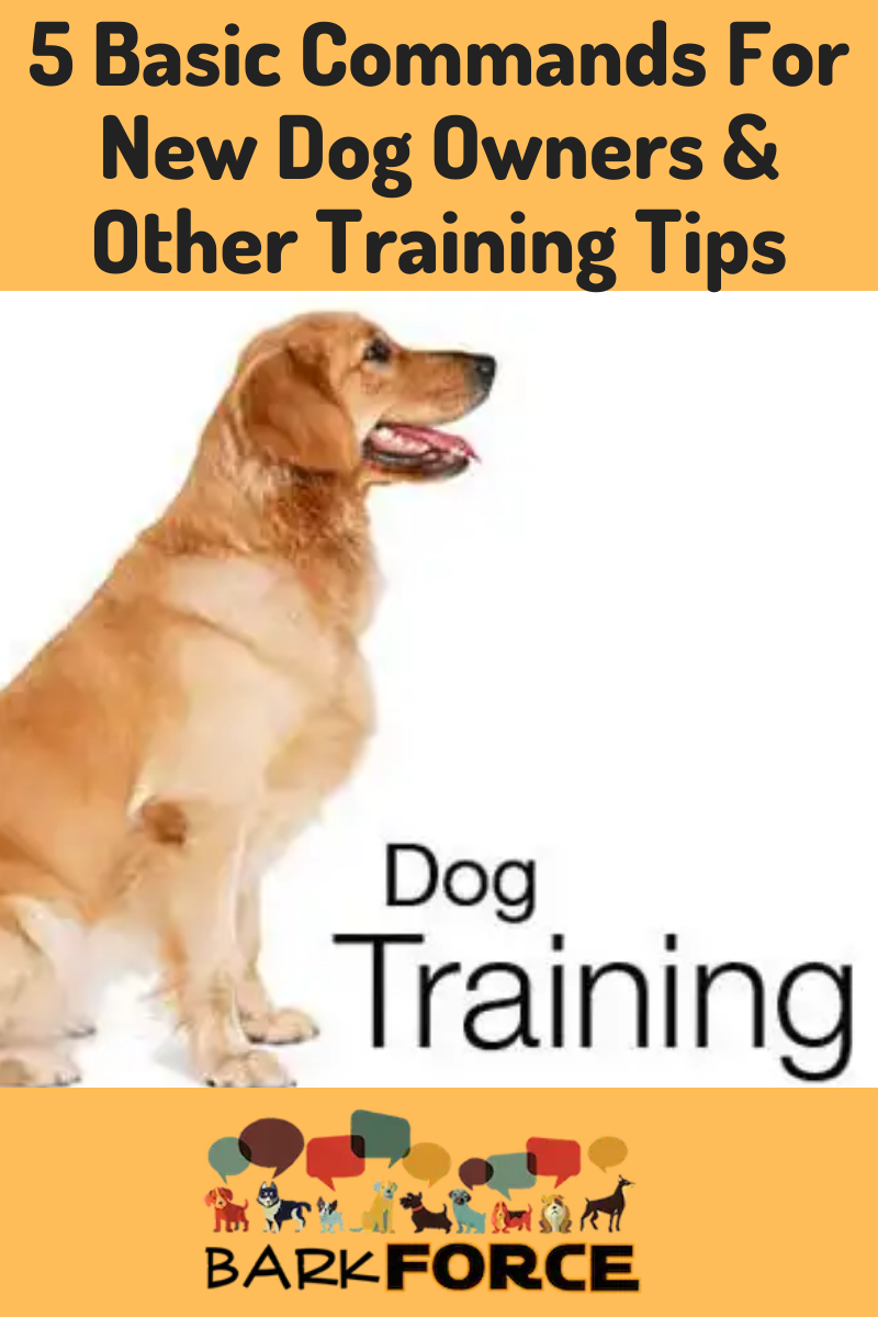Training Basics For A New Dog Owner Barkforce In 2020 Dog Training Best Dogs For Families Dog Owners