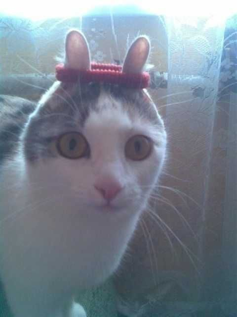 New Funny Cats It just keeps getting funnier It just keeps getting funnier - Imgur 4