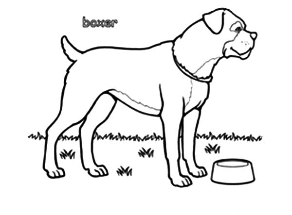 Boxer Dog Bowl Is Empty Coloring Pages Best Place To Color Dog Coloring Page Boxer Dogs Coloring Pages