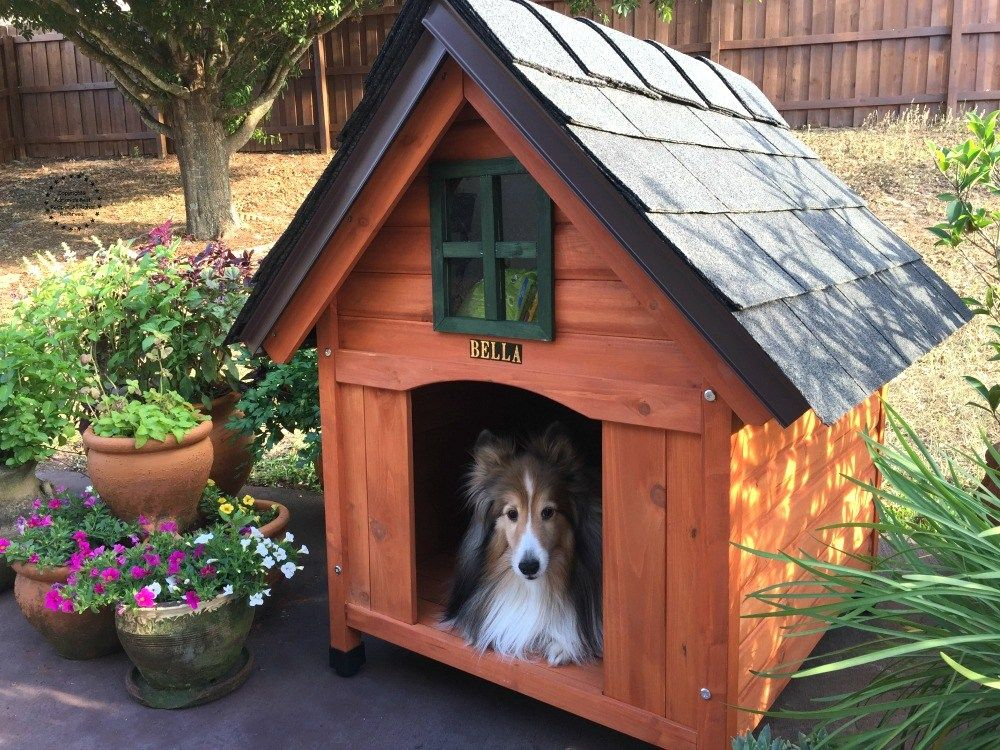 Building The Best Dog House Cool Dog Houses Luxury Dog House