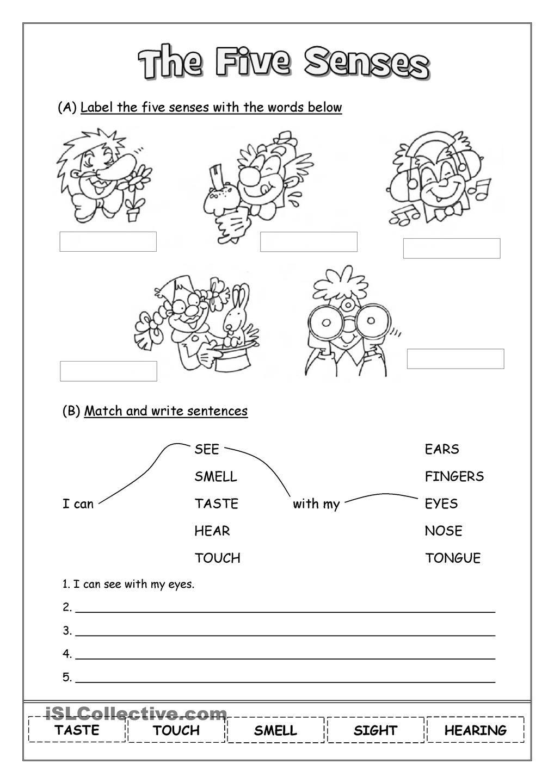 the five senses 2nd grade worksheets, 1st grade