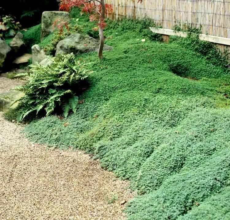 Jardins Japonais Idees D Amenagement Conseils Precieux Et
