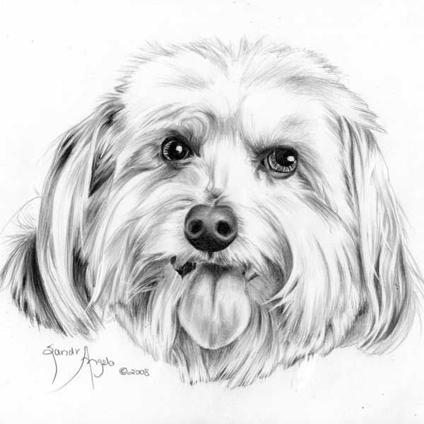 sandra angelo teaches online art lessons on how to draw animals and more here she shares a step by step on how to draw this curious little part of a dogs