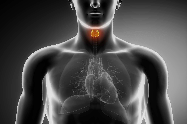 Thyroid Malfunction Understanding The Endocrine System