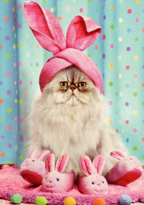 KittyBunny