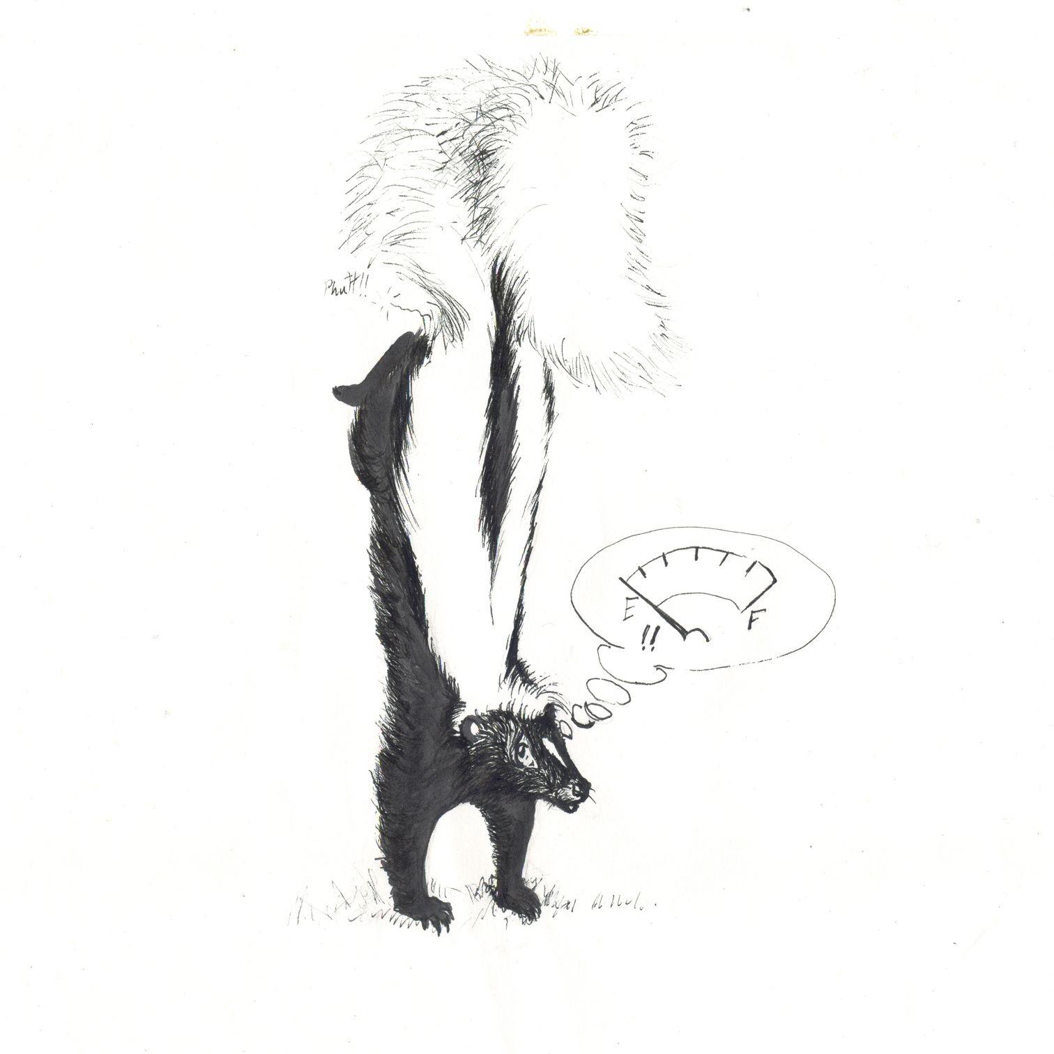 pin by ellen bounds on skunk drawings pinterest