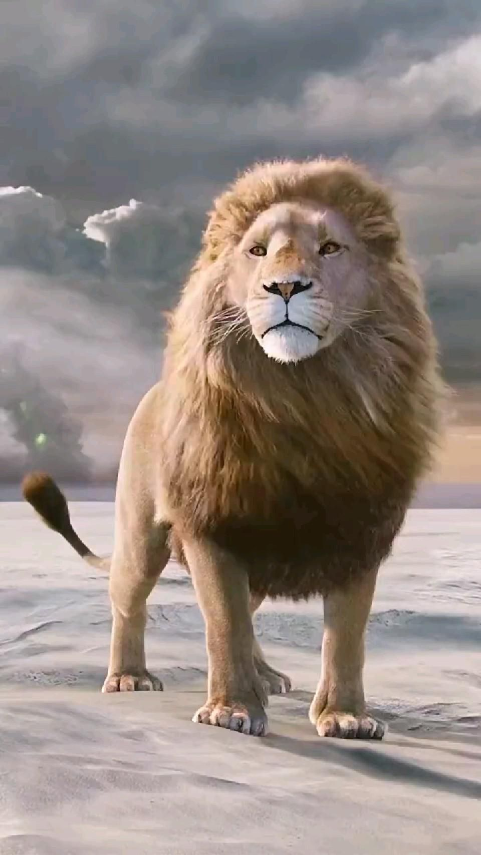 The Lion King 👑 🦁