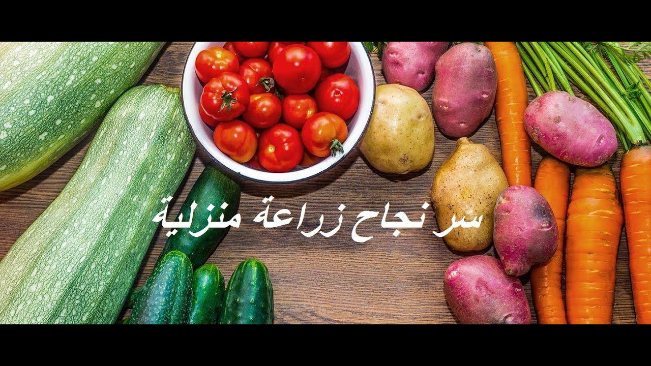 سر نجاح الزراعة المنزلية ومنتظرين تجاوب والاسئلة بالتعليقات حلقة 336 Vegetables Cucumber Radish