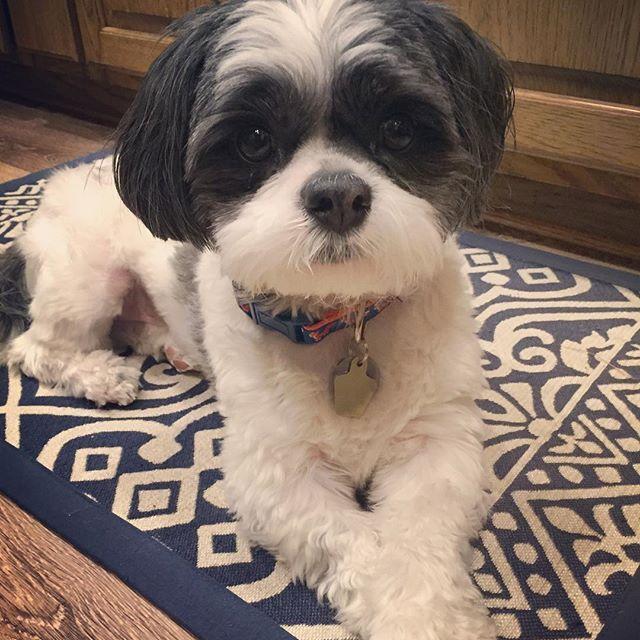 We are going to have a maahhhvelous 3-day weekend. 🐶💙🐶 #pawscrossed #tgif #hoitytoity #longweekend #happyfriyay . . . #mydogiscutest #woofpackbros #furbaby #dogsofinstagram #doglover #shichon #chubclubpups #shihtzu #dog_features #shihtzusofinstagram #dogoftheday #love #unitedpawsgroup #dogsandpals #shihtzunation #dogscorner #dogs #mydog #snapwagdogs #mydogisfamily #furrybabyloveclub #shihtzulovers #doglads #dogsofinstaworld #ilovemydog