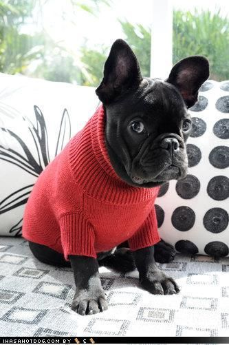 I'm wondering what he thinks. He looks like: I don't like this sweater but what can I do about it ;)