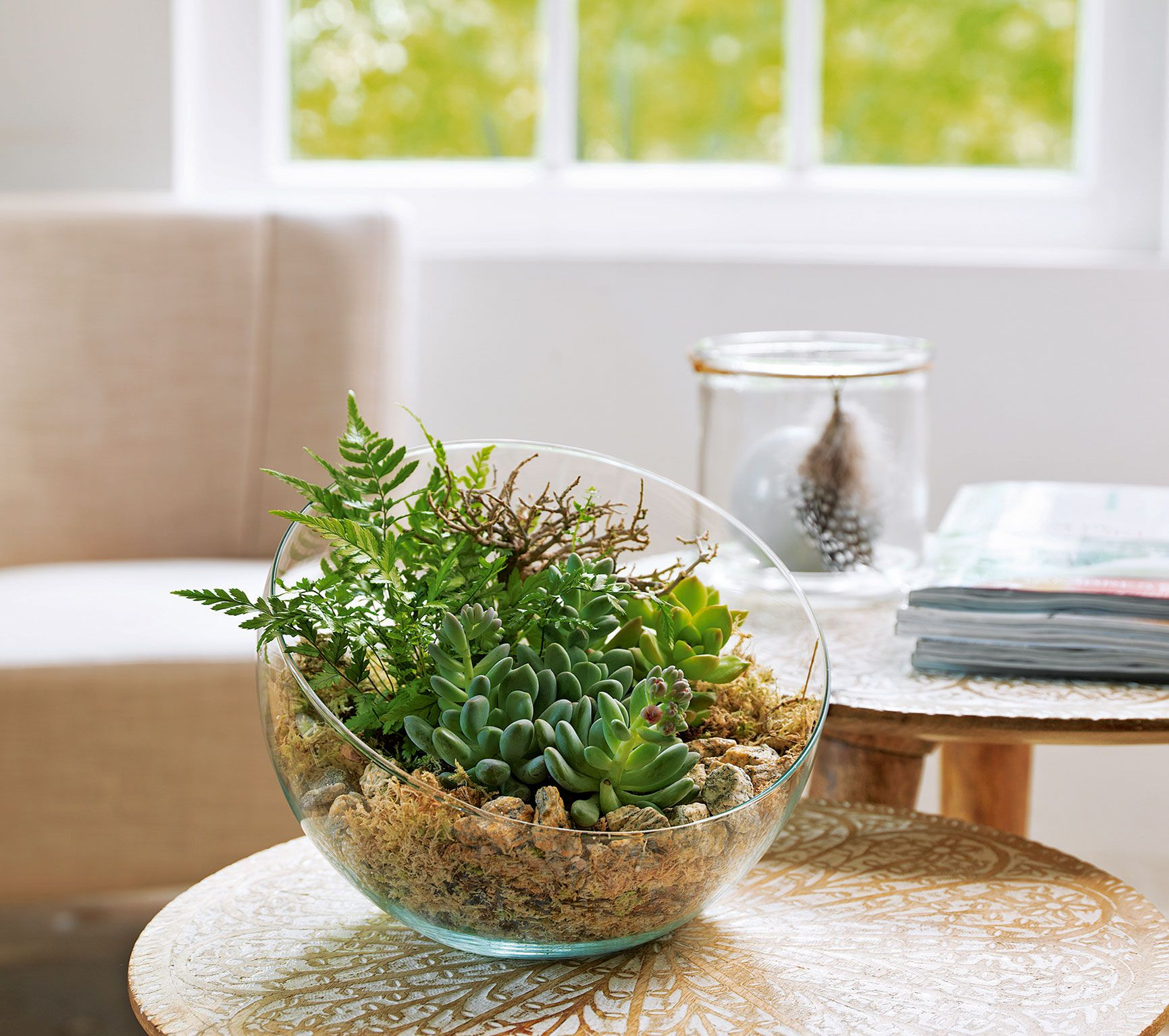 coupe boule verre 3 plantes grasses d22cm coup composition et pelouses. Black Bedroom Furniture Sets. Home Design Ideas