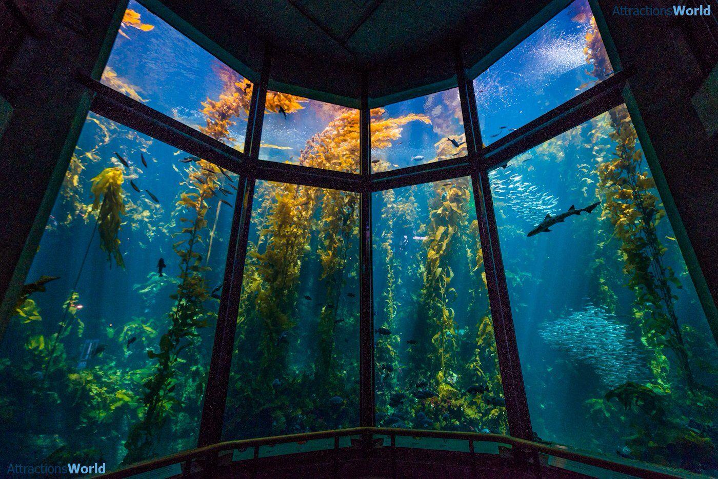 monterey sea aquarium salad bowl of america sea