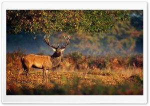 Big Deer Under Tree HD Wide Wallpaper for Widescreen