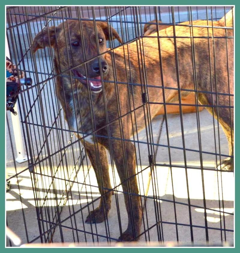10++ Augusta maine animal shelter images