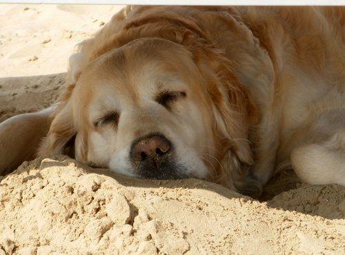 Spiagge cani Rimini: Vacanze con animali Bagno Egisto 38 Viserba ...