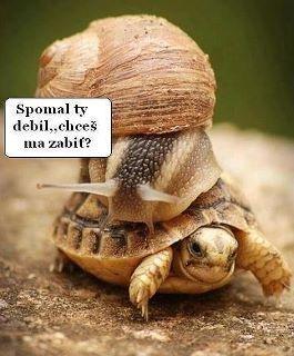 Vysoká rychlost | Vtipné obrázky - obrázky.vysmátej.cz