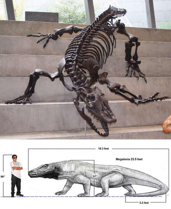 Prehistoric Komodo Dragon : prehistoric, komodo, dragon, Nature, TheCHIVE, Komodo, Dragon,, Large, Lizards,, Dragon, Drawing