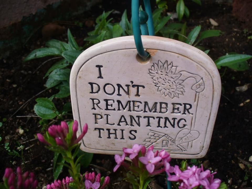 this describes half of my garden i dont remember planting this plaque