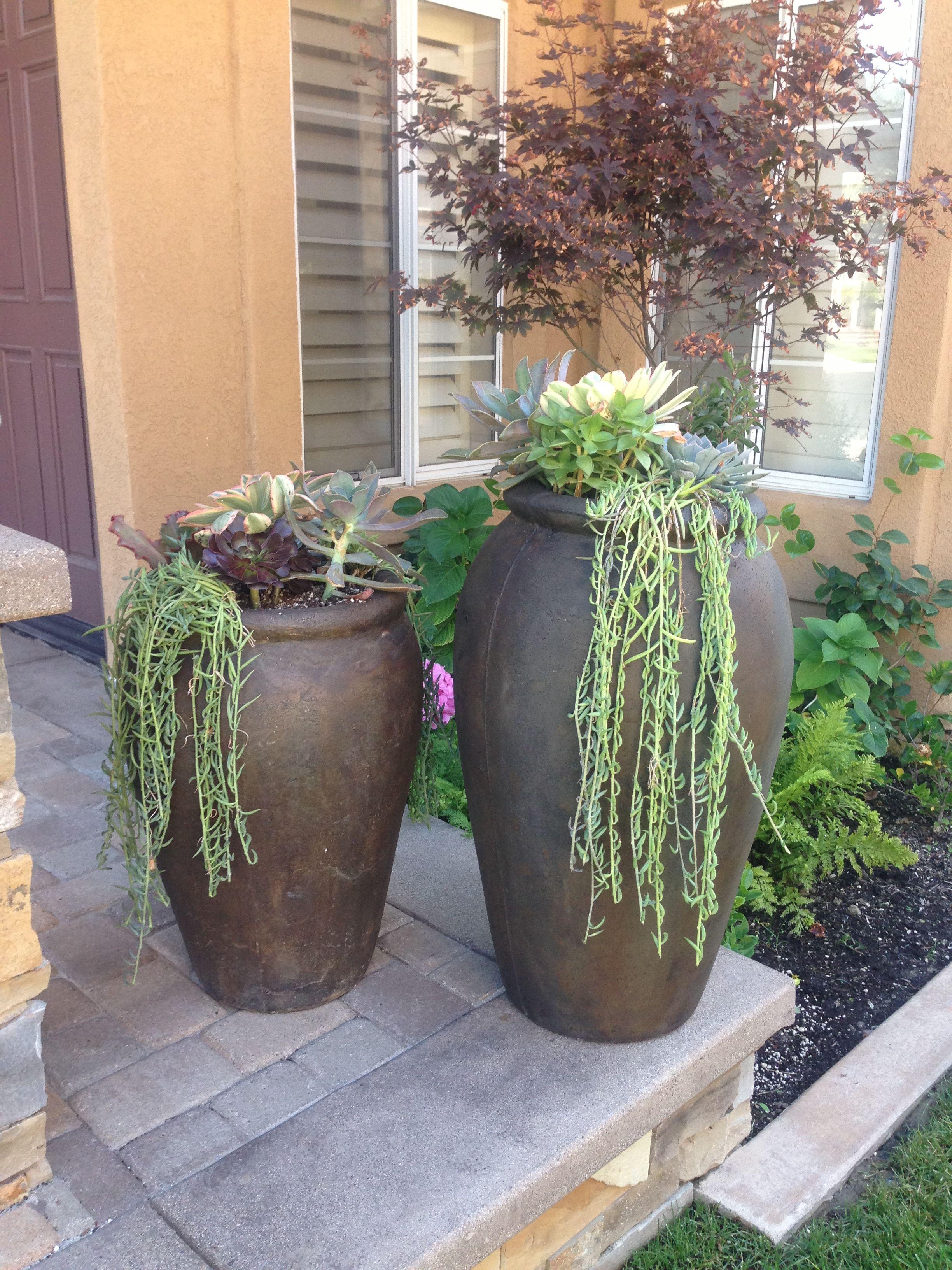 Succulents On Front Porch