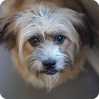Smyrna Ga Lhasa Apso Mix Meet Nora A Dog For Adoption Best Friends Pets Pet Adoption Center Kitten Adoption