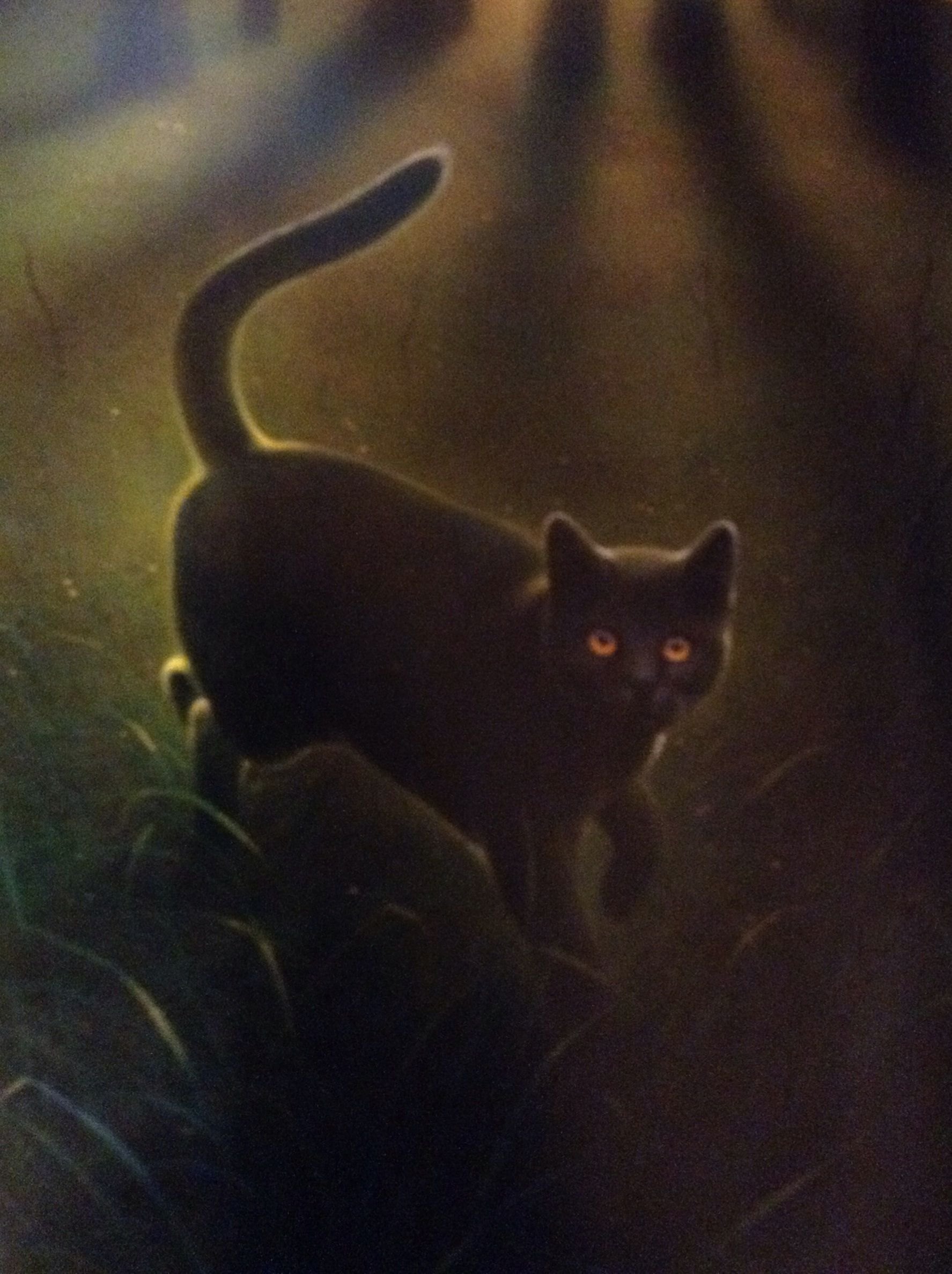 Gray Wing | Warrior Cats | Pinterest | Warrior cats and Cat