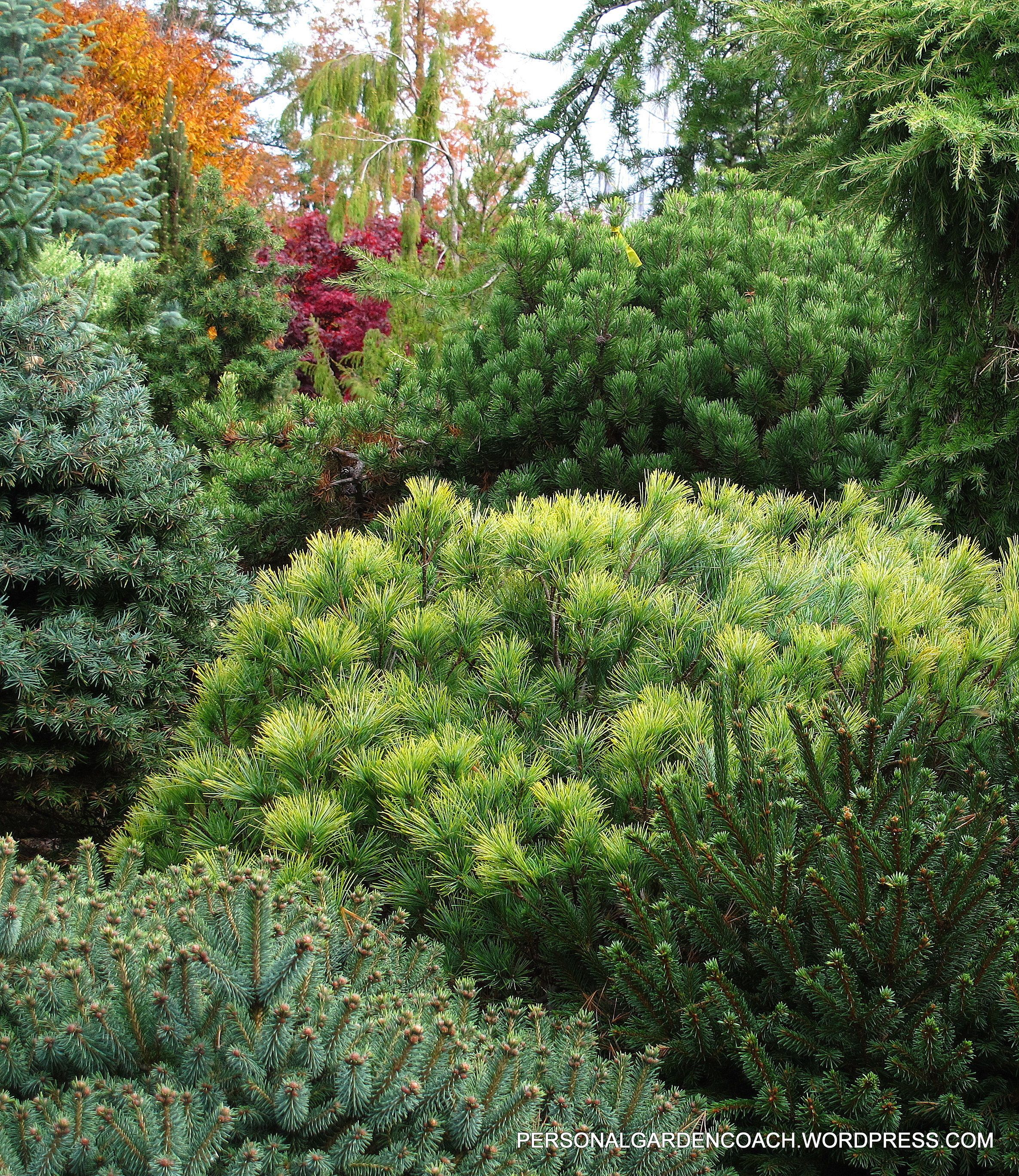 Layers Of Decadent Conifer Texture Carry The Eye All The