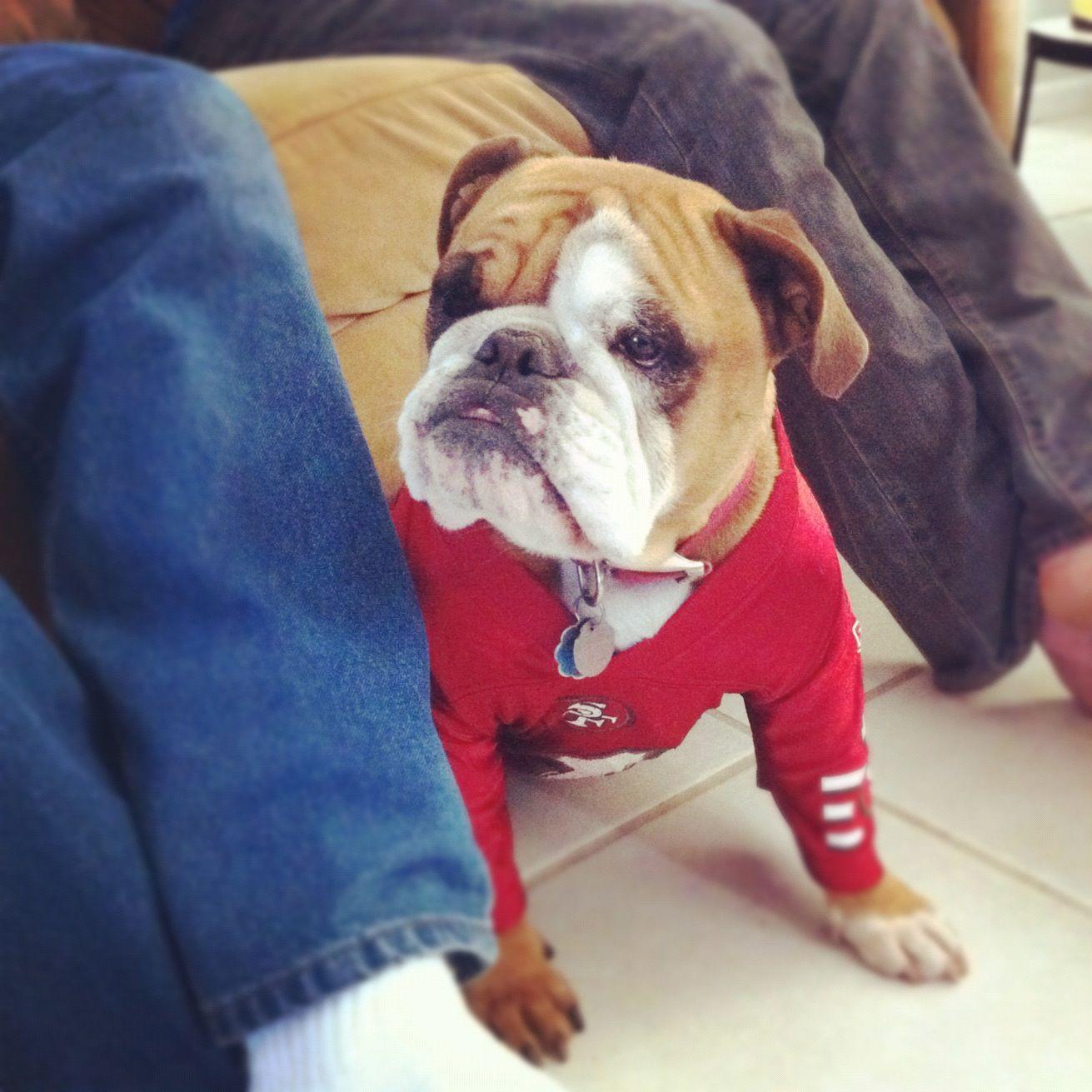 Lola The English Bulldog Sporting Her 49ers Jersey English Bulldog Bulldog Puppies Bulldog