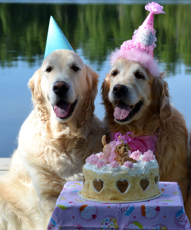 день рождения у собаки поздравление фото счастью, эту непростую