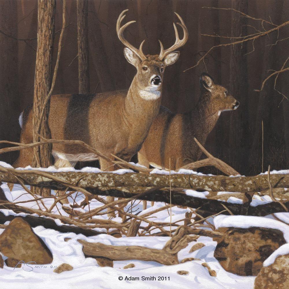 whitetailed deer North american wildlife art, Deer art