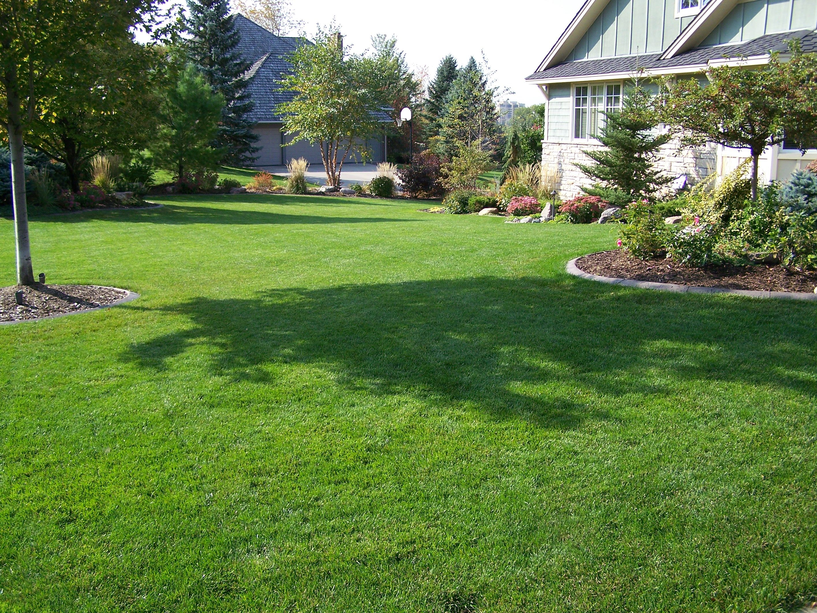 How to Treat Your Lawn in Spring Lawn care, Spring lawn