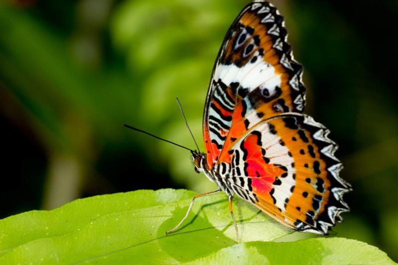 primavera capullos mariposa - Buscar con Google