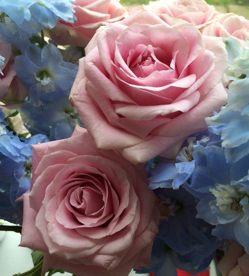 Blue And Pink Flower Shop Close Ups Pinterest Flower Shops