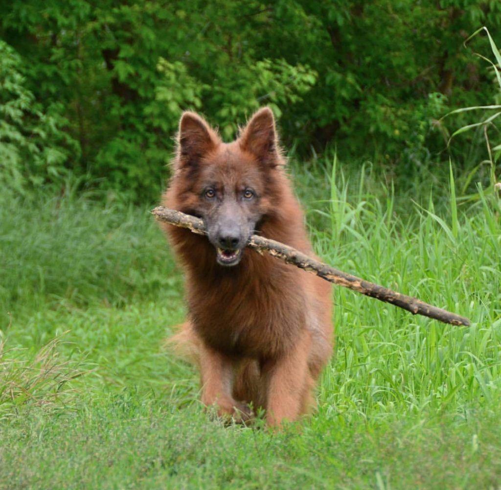 Pin on German Shepherds
