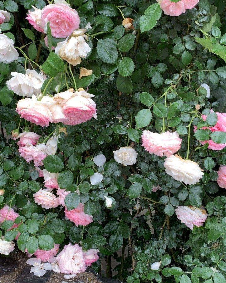 ปักพินโดย DanielleD ใน Pink Garden